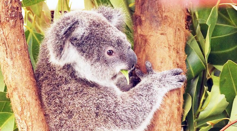 豪州旅行記1:オーストラリアで野生のオカメに会えるのか?