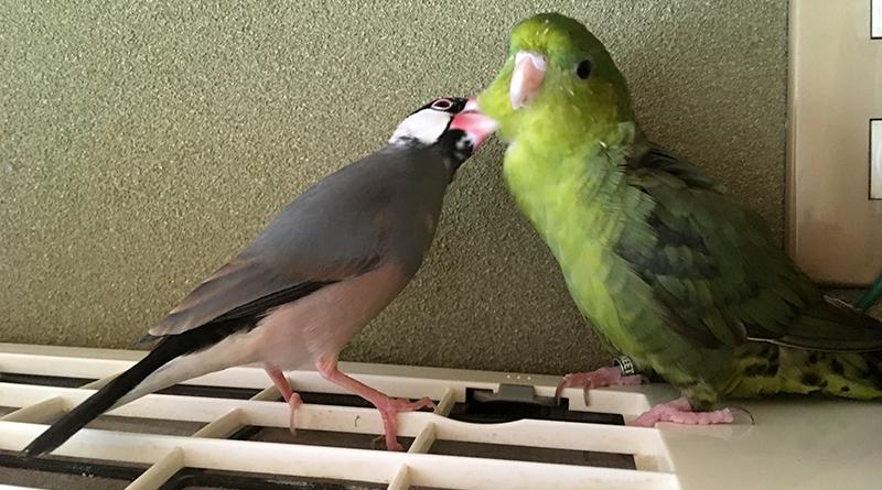 2018年3月の鳥スタグラム