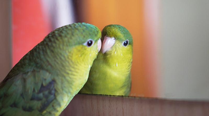 2019年1月の鳥スタグラム